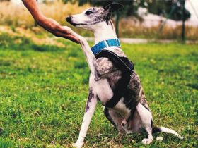 How to be a Good Dog Trainer