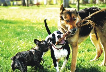 Dog Breeds The Sporting Group
