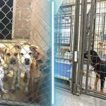 Where to get Dog Pet Store or Pet Shelter