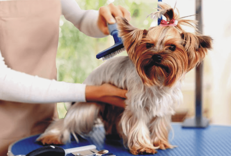 how to detangle matted dog hair