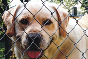 dog fence ideas