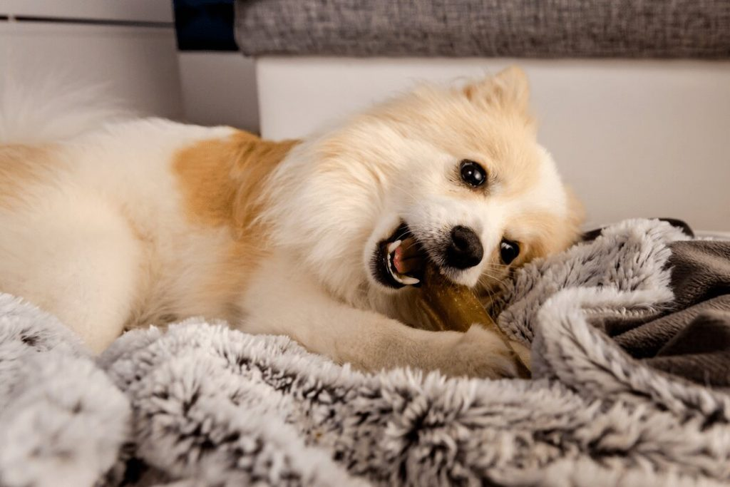 Health Benefits of Bone Broth for Dogs
