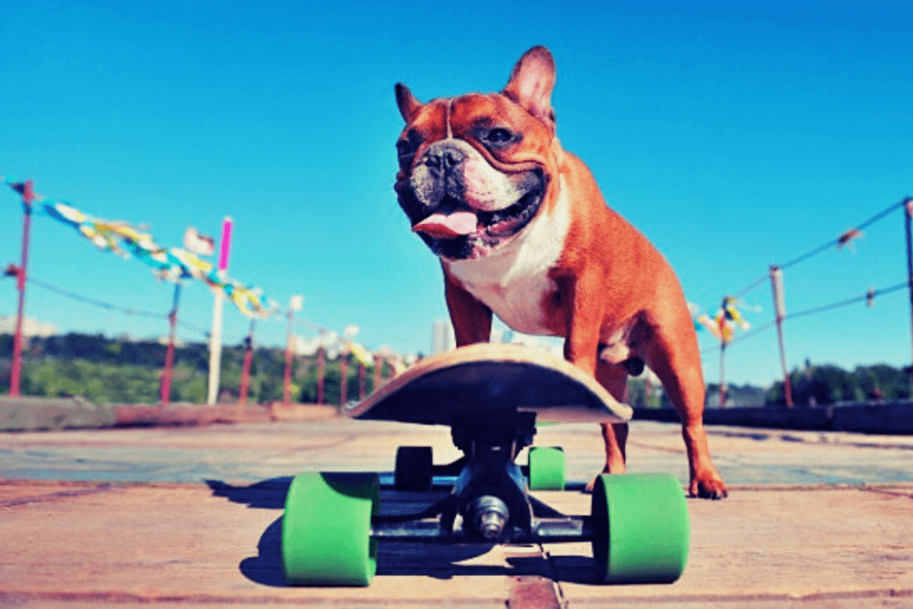 Affects French Bulldog Shedding