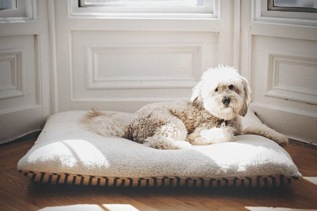 Washable Dog Bed Covers