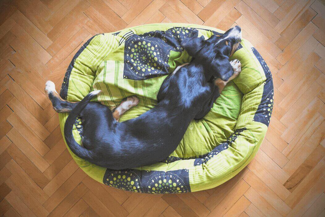 Best Indestructible Dog Bed in 2021